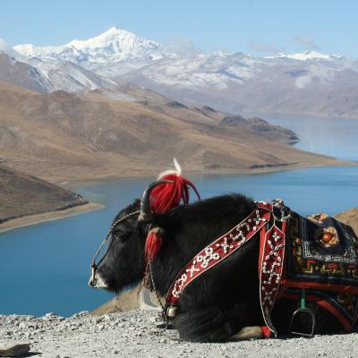 24-Tibet-diapo