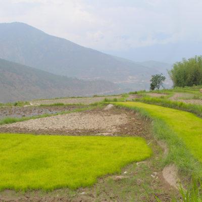 Bhutan-42