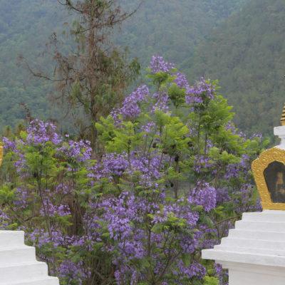 Bhutan-81